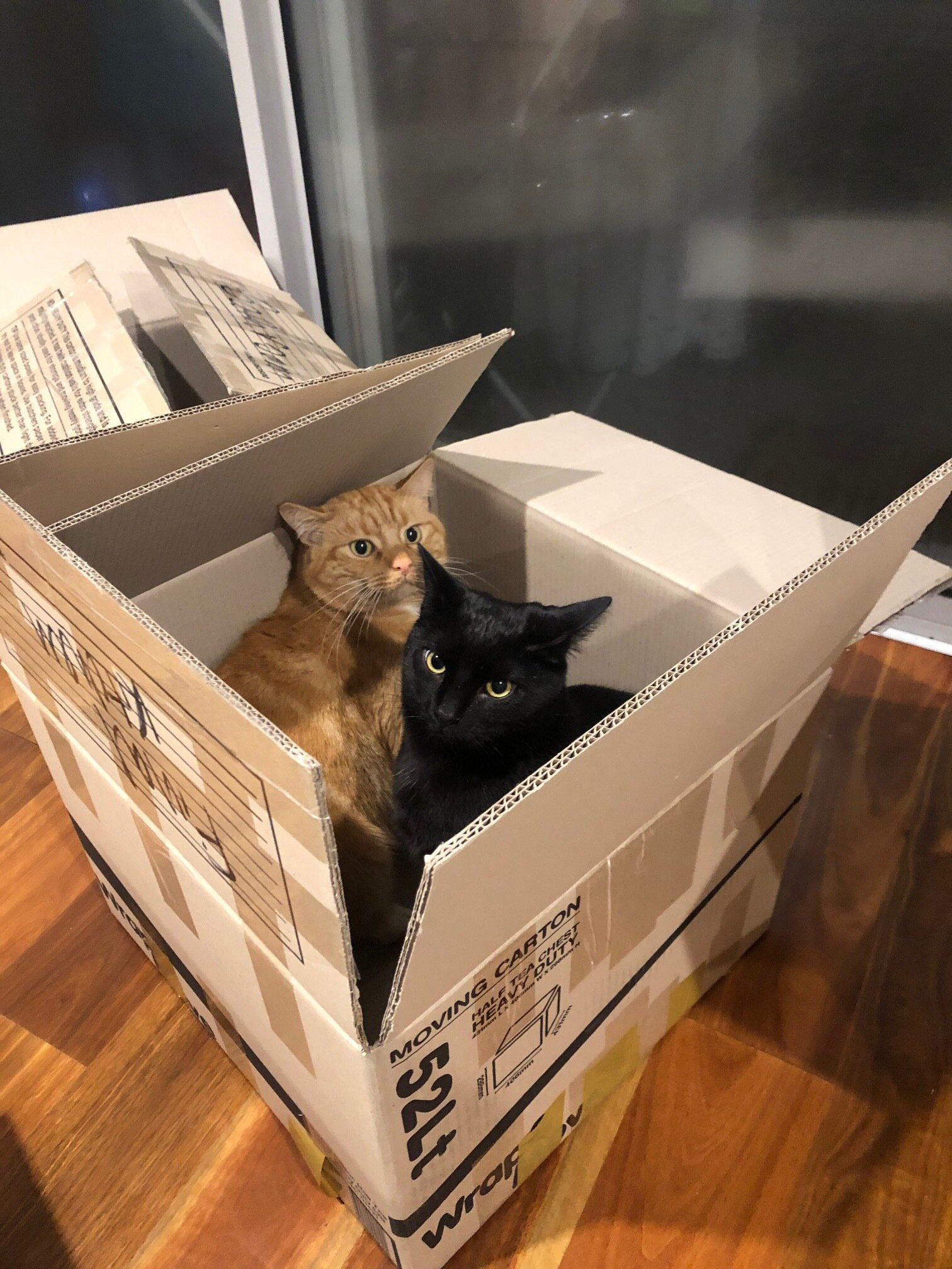 The cats did not love the moving process - they did enjoy the boxes, though.
