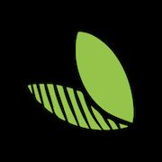 matcha green tea leaves.png