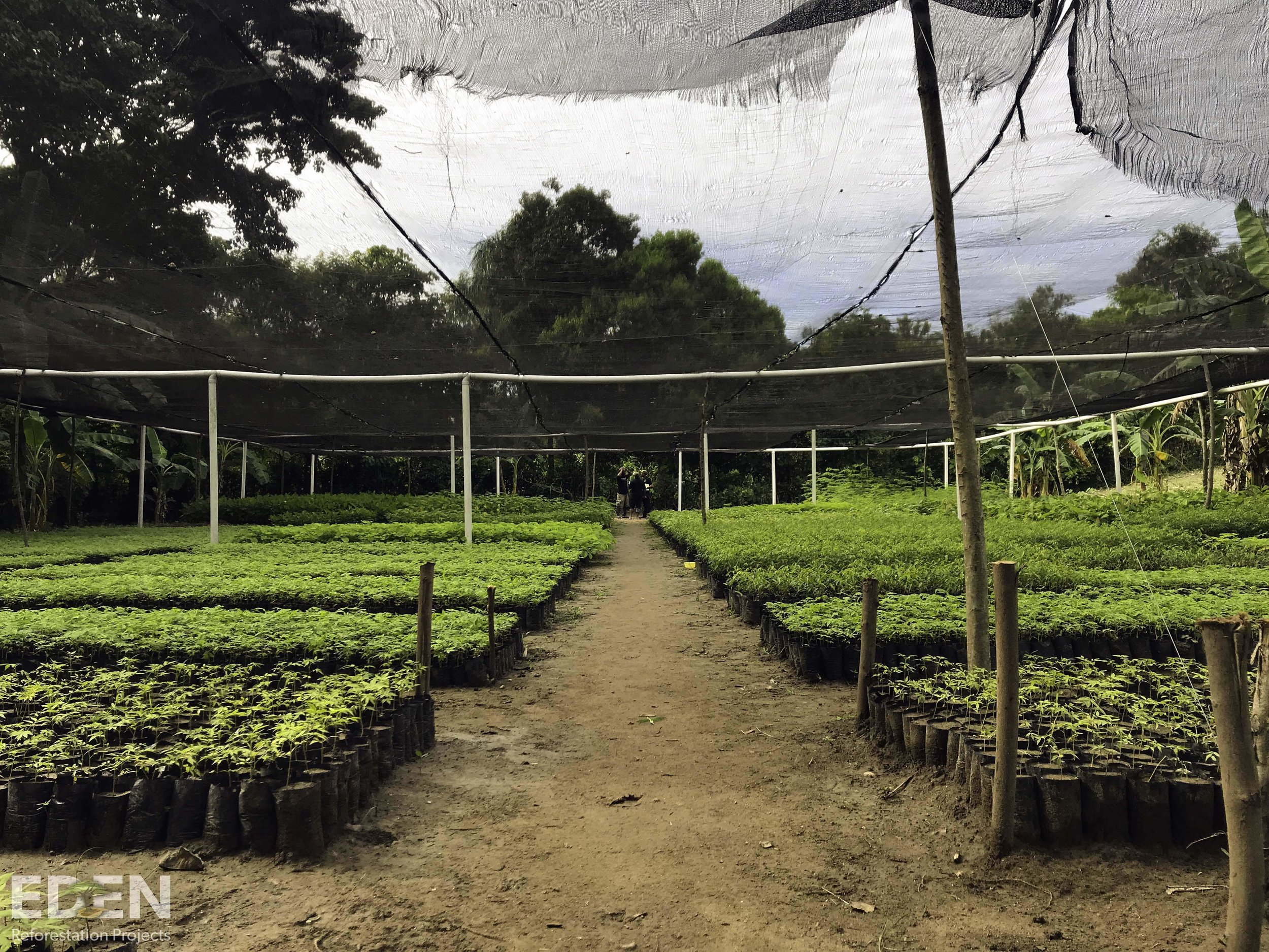 charity environment reforestation