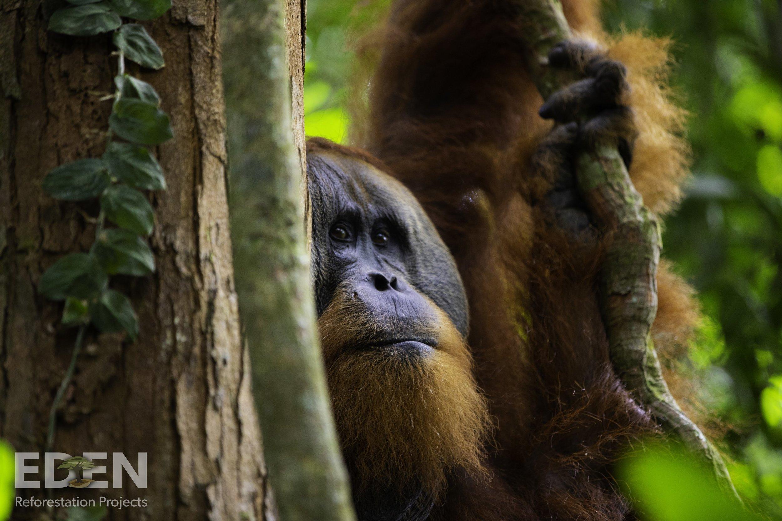 reforestation charity environment..jpg