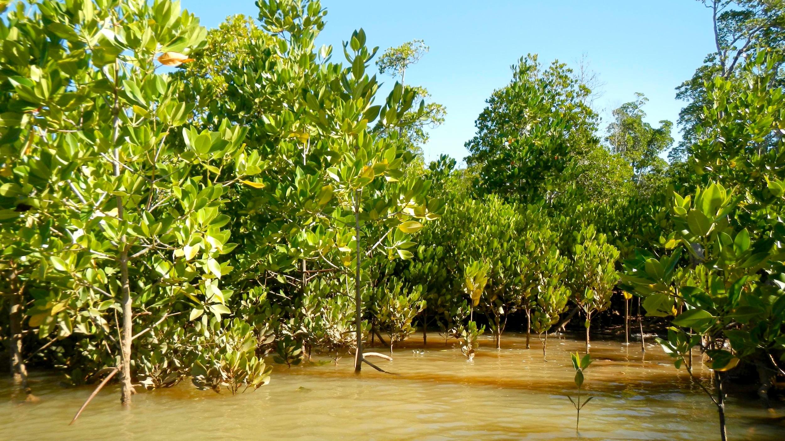 reforestation charity environment.jpg