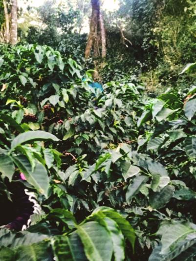 Petrona 3 (4)jpg.jpg