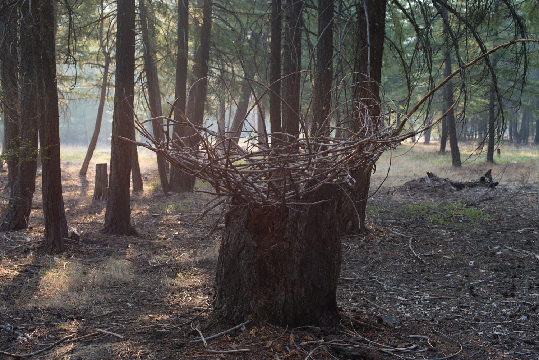 Mazama_Nest-3.jpg