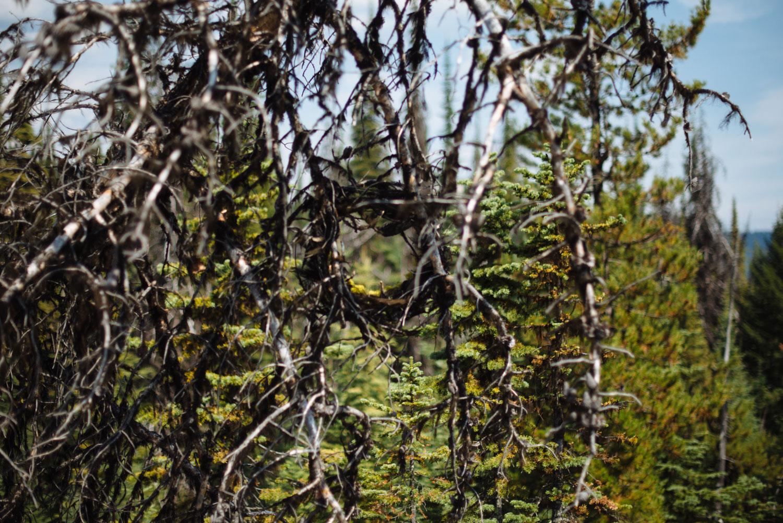 viewpoint_caverhill-4.jpg