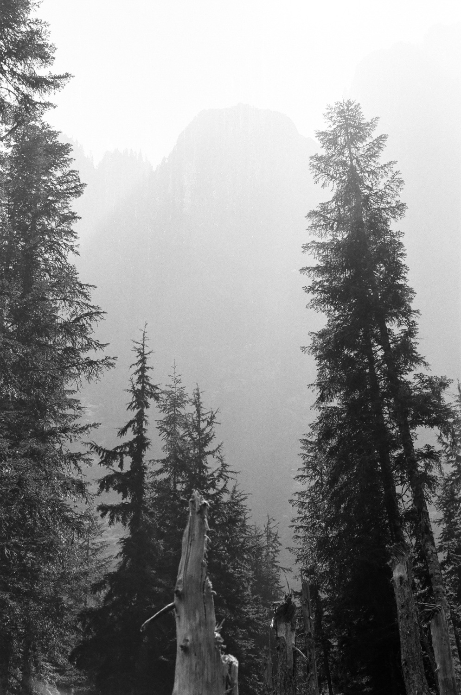 smoke_forest_fire.jpg