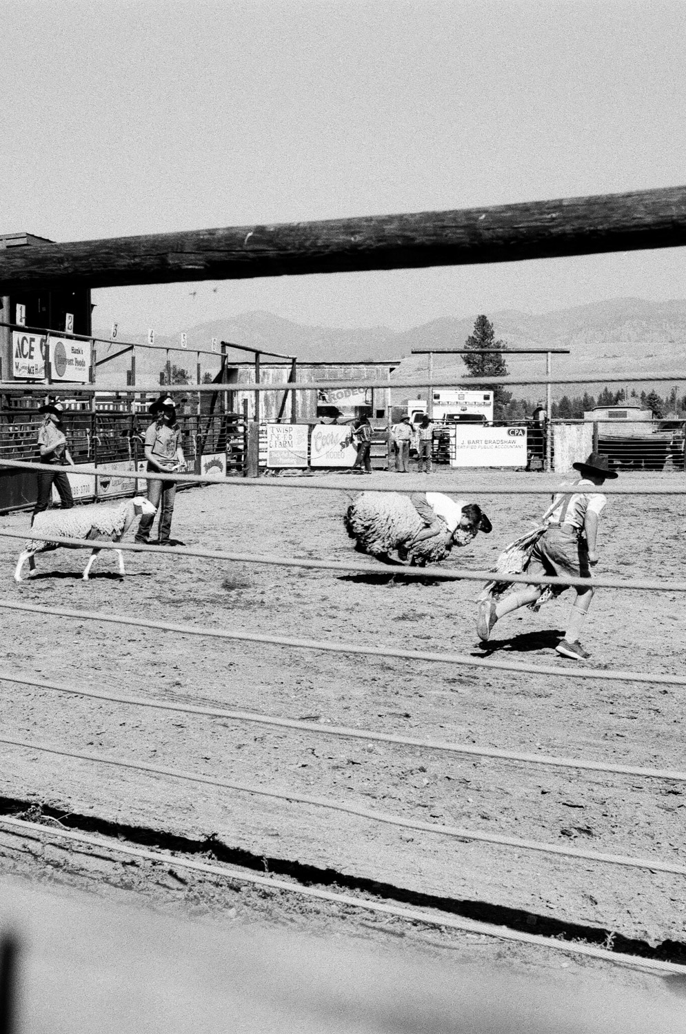 mutton_busting_rodeo-2.jpg