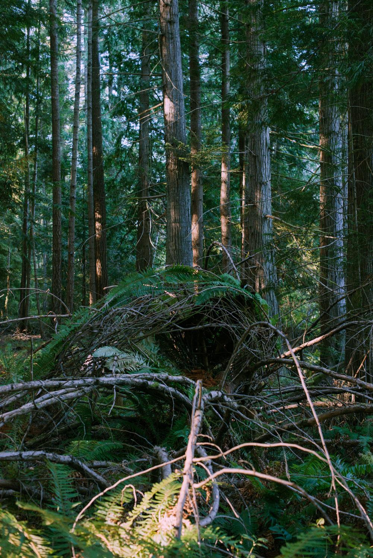 nest_heatherbrincko_2018-2.jpg