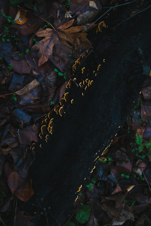 Found glowing up from a dark, soggy stump! OOOOOH :)