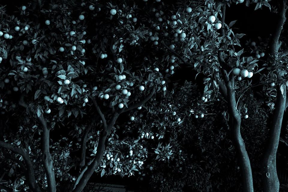 Image of a tree in Anacapri by Alexi Paladino