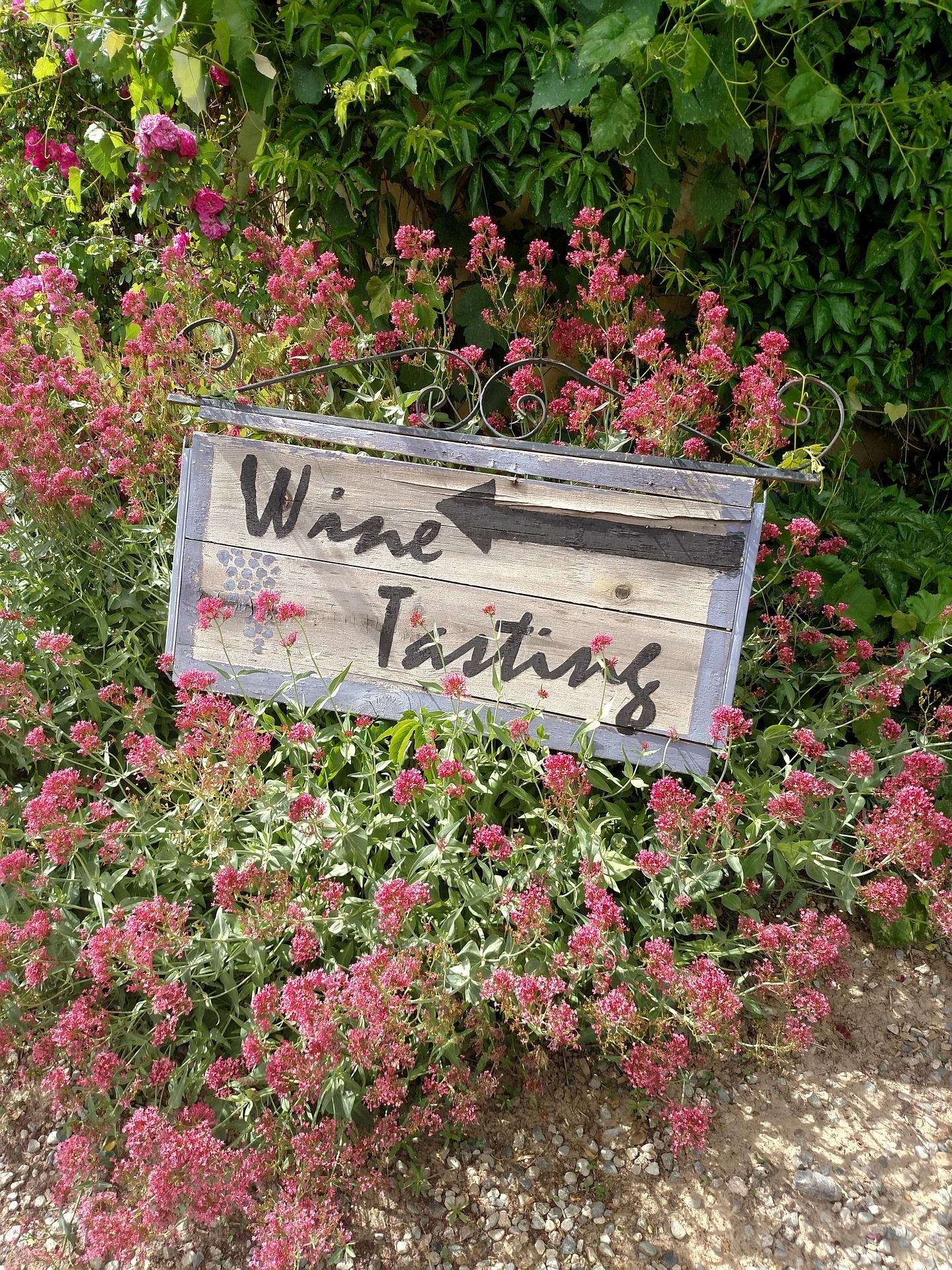 vineyard-1450527_1920.jpg