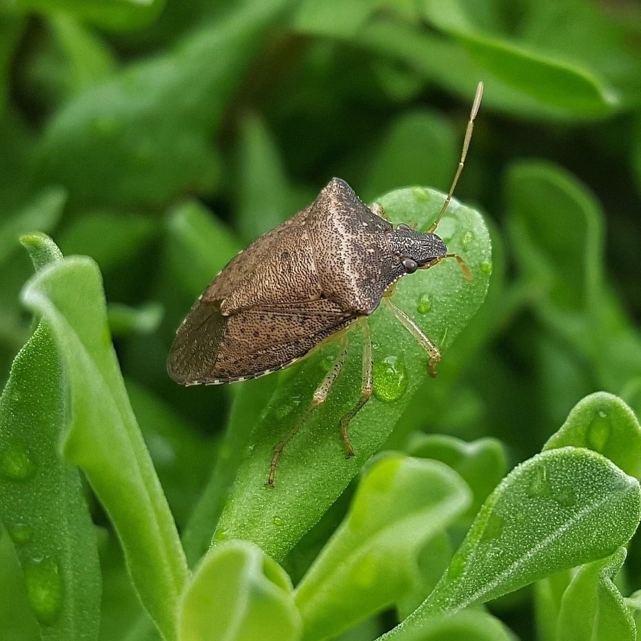 Stink Bug Treatment in Charlottesville