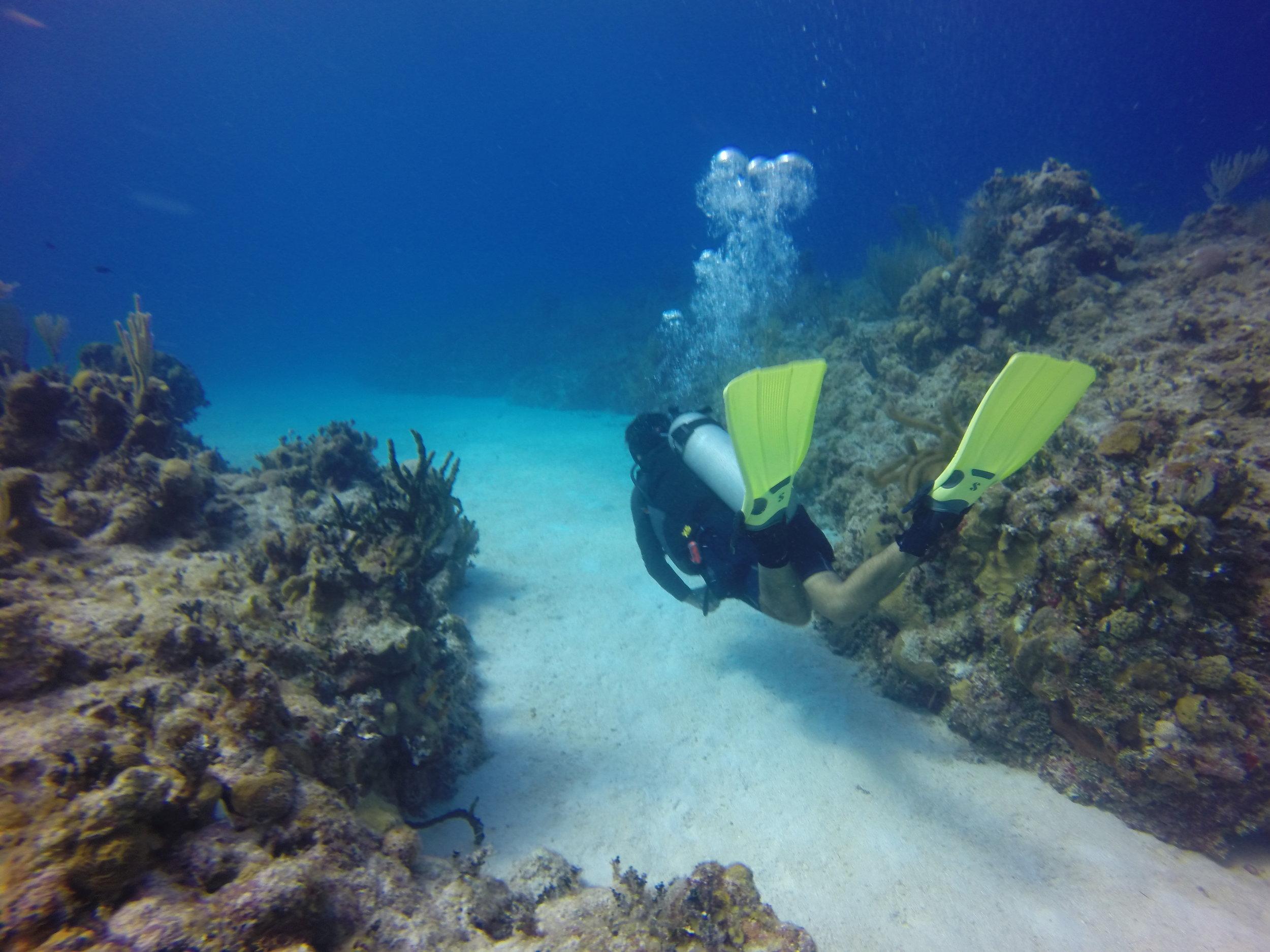 dive-mahahual-01.JPG