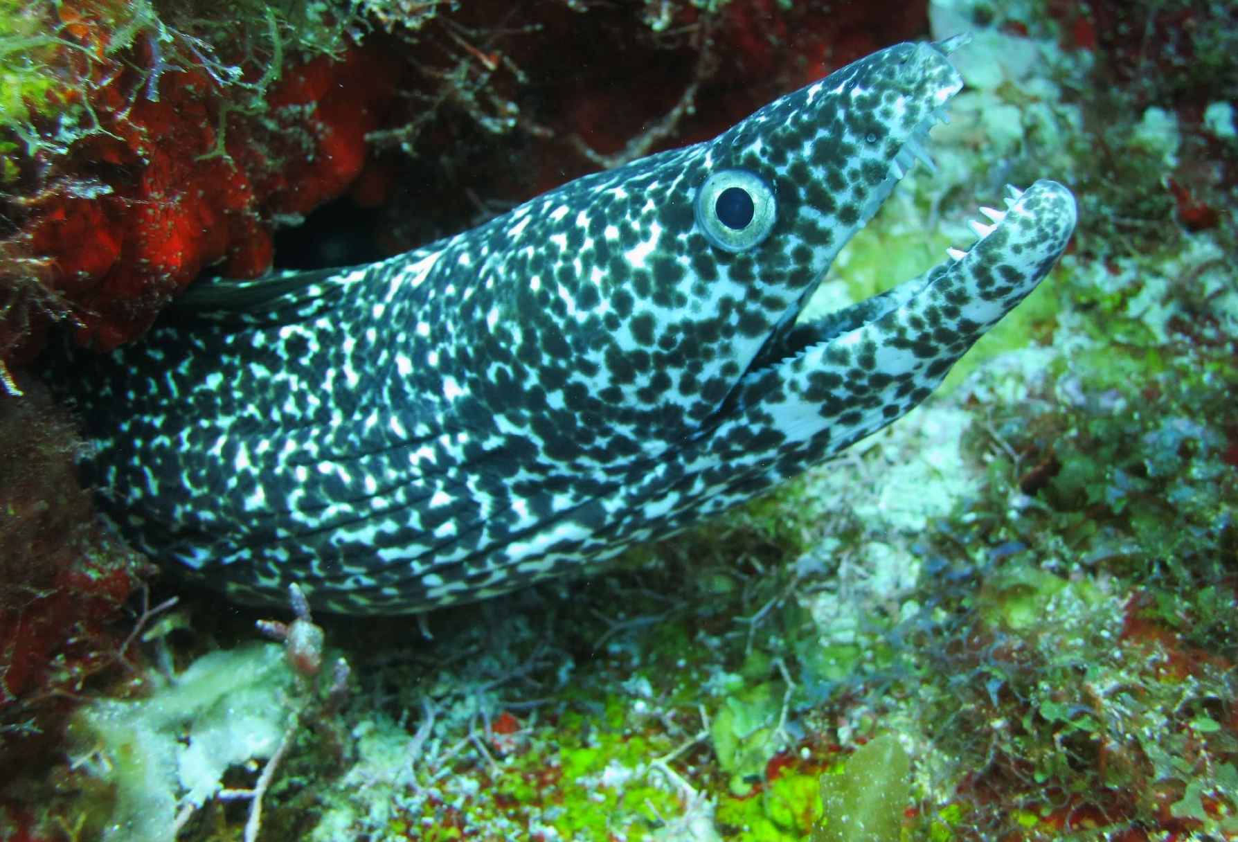 dive-dreamtime-mahahual-eel
