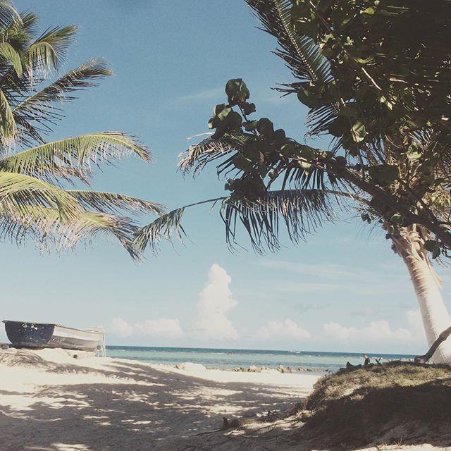 . S U N D A Y ' S  E S C A P E 🌴 . . . #beach #ocean #staysalty #stayhappy #diving #scuba #sundayfunday #vibe #weekendvibe #saltyhair #sandybeach #mexico #caribbean #sea