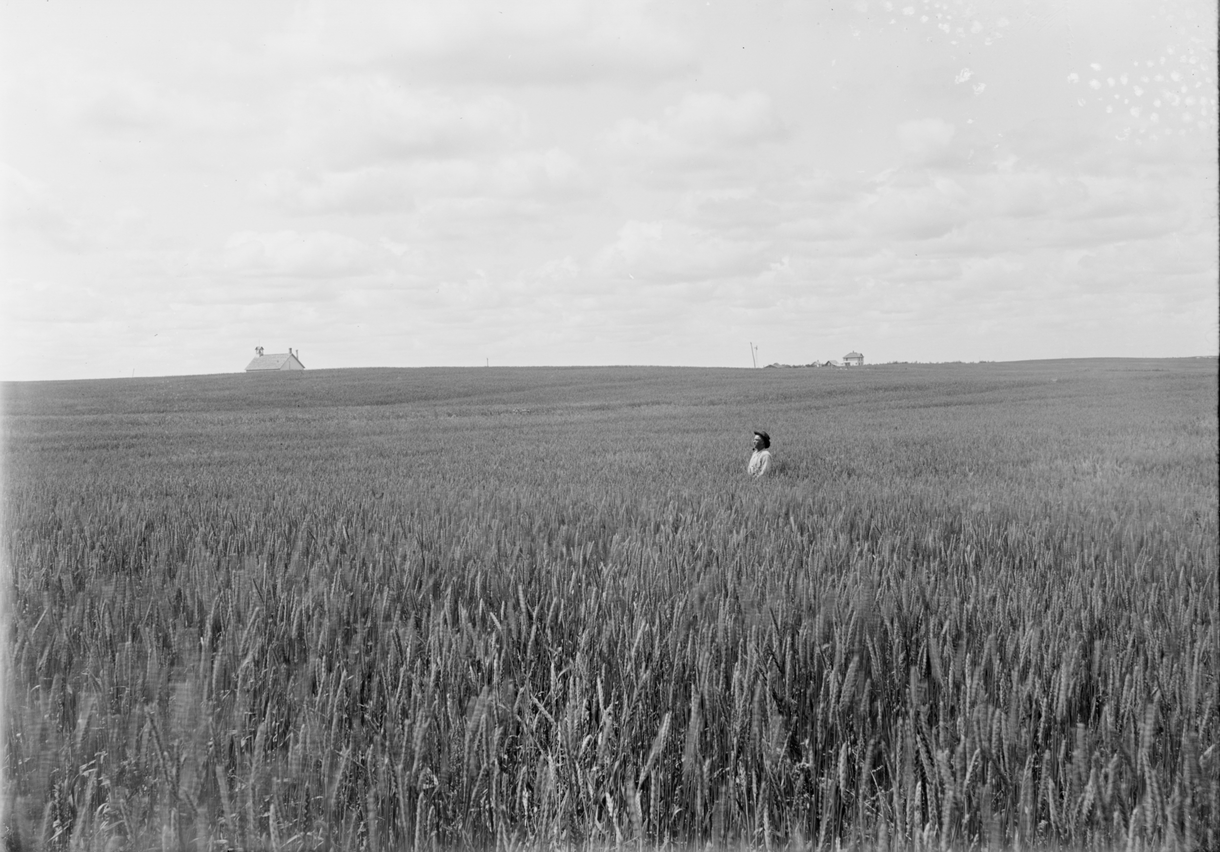 Wheat Field.png