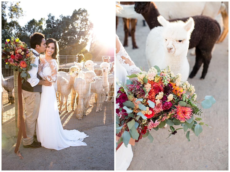 de joy photography farm wedding alpacas
