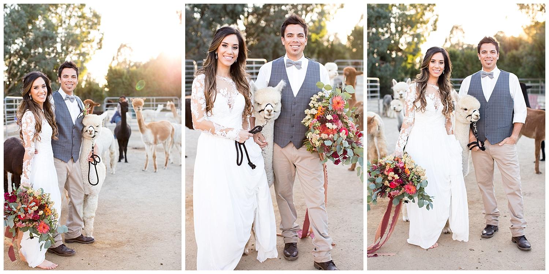 de joy photography wedding with alplacas