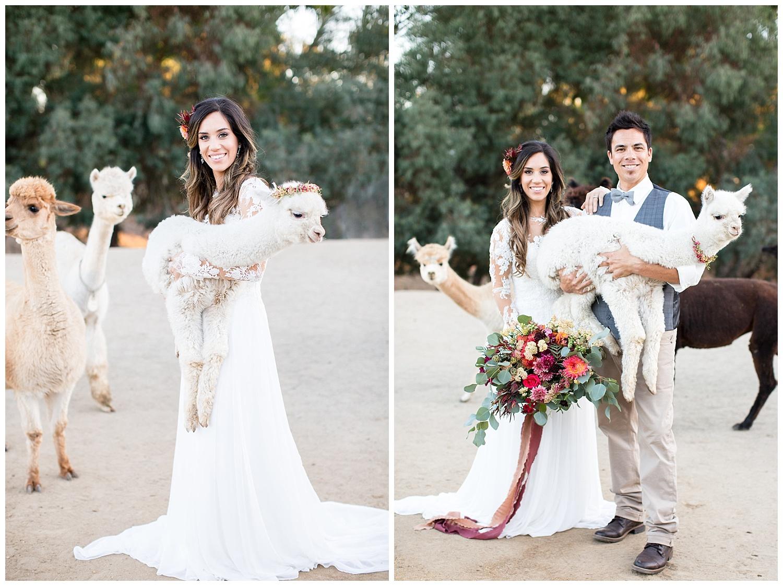 de joy photography wedding couple with alpacas
