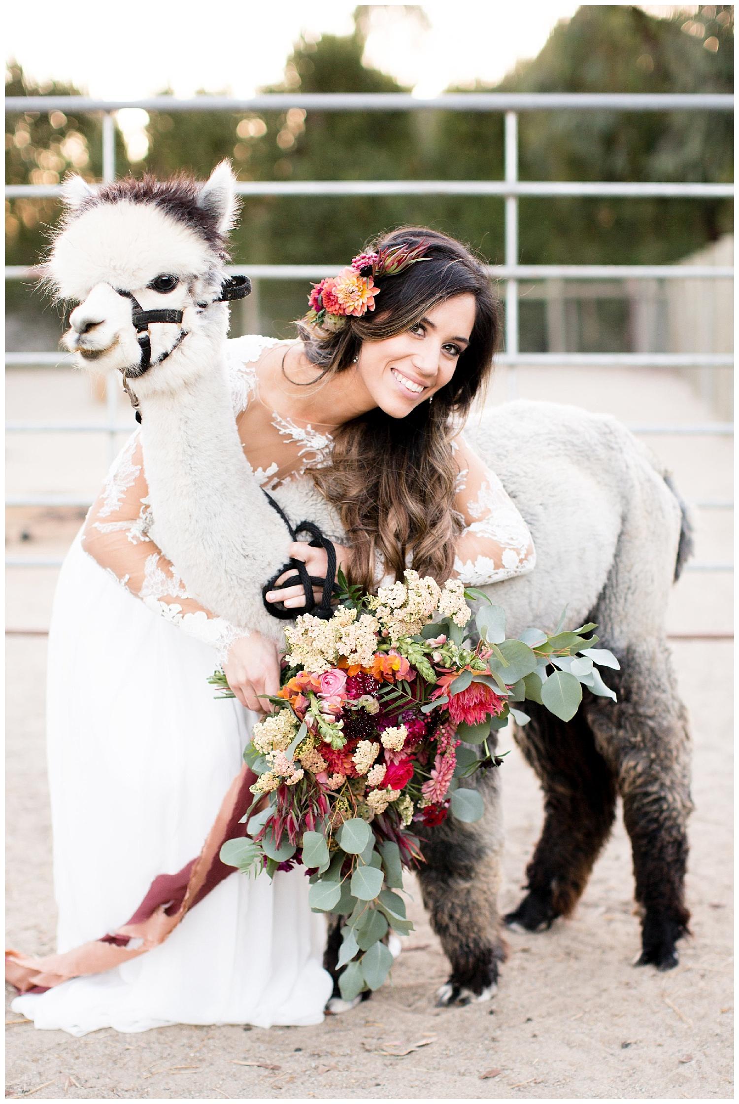 de joy photography bride with alpacas