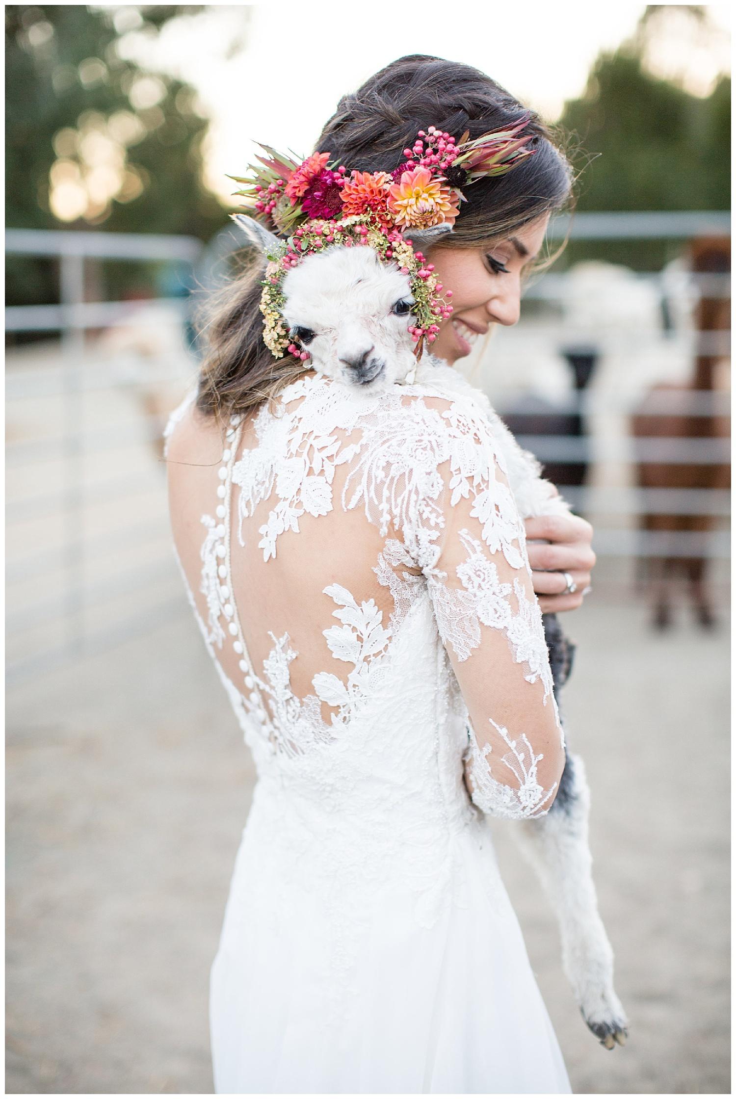 de joy photography baby alpaca with bride