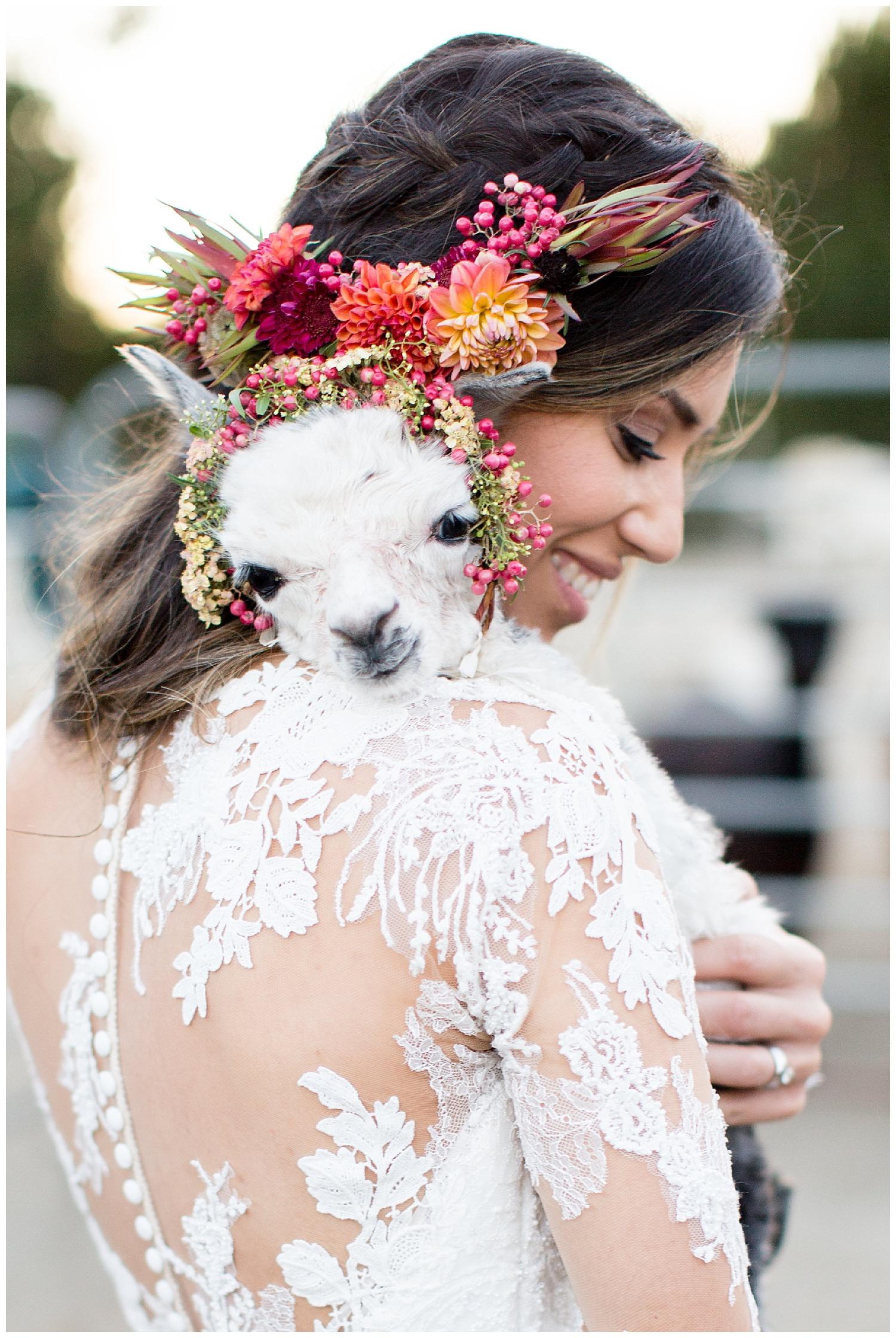 de joy photography baby alpaca floral crown