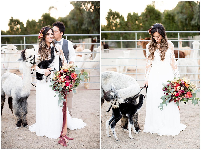 de joy photography farm wedding with alpacas