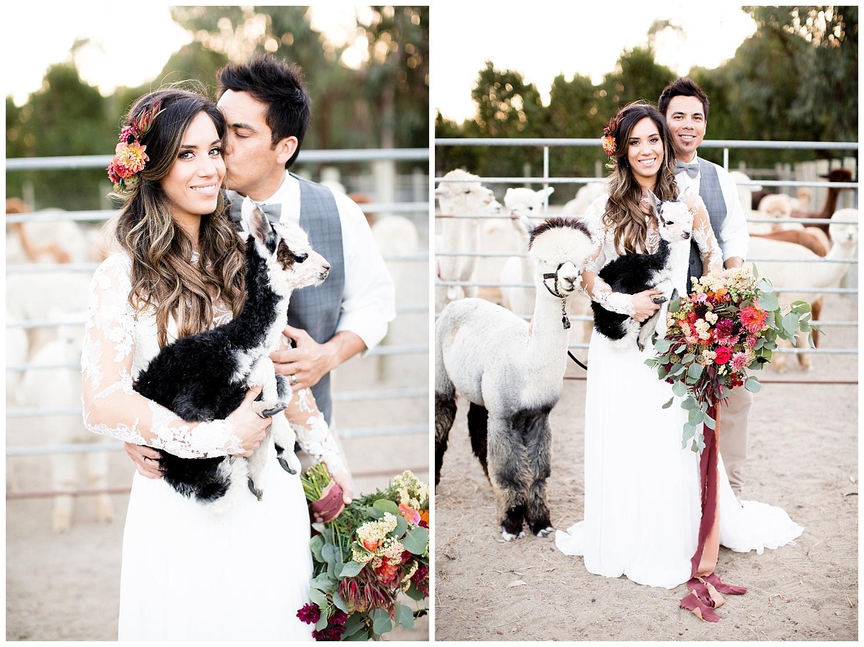 de joy photography alpaca wedding