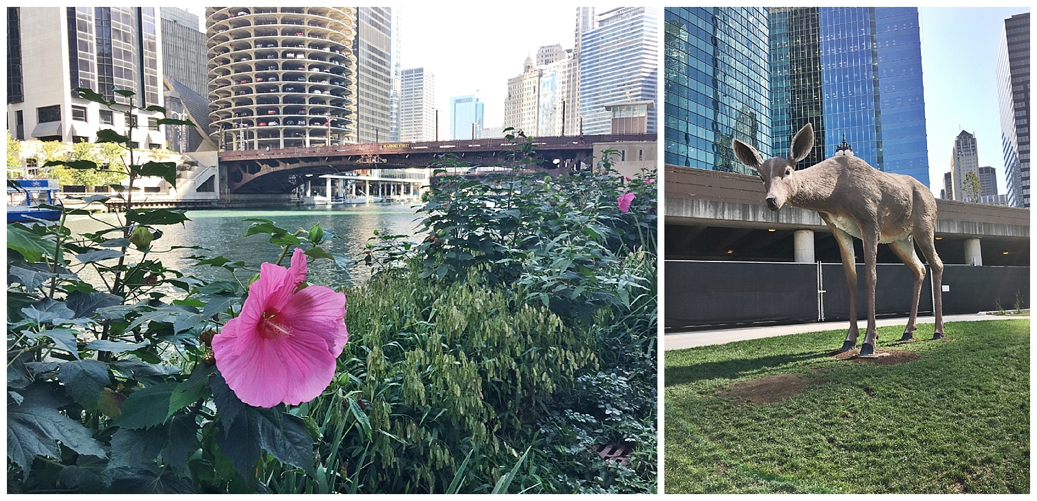 Spent some time powerwalking along the Chicago River. So beautiful.