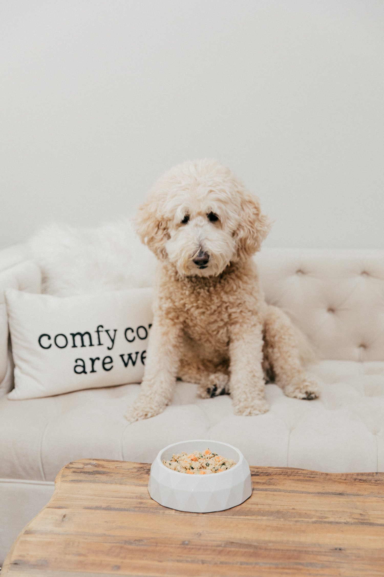 The Farmer's Dog x maddy - the food that has changed her life (+ a 50% off discount code at bottom of post ;)