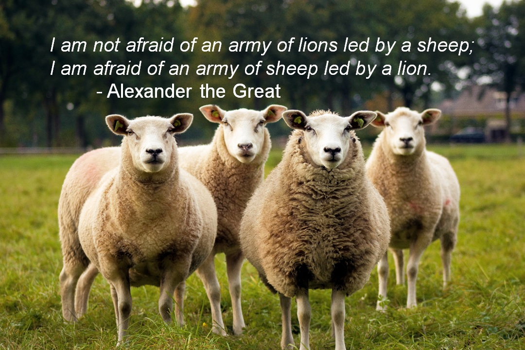 sheep with Alex the Great quote.jpg