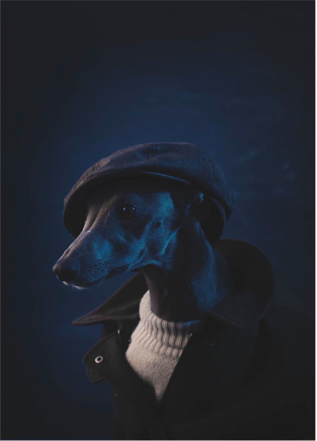 Matthew Lloyd Portrait, Commercial & Drinks Photographer Awards
