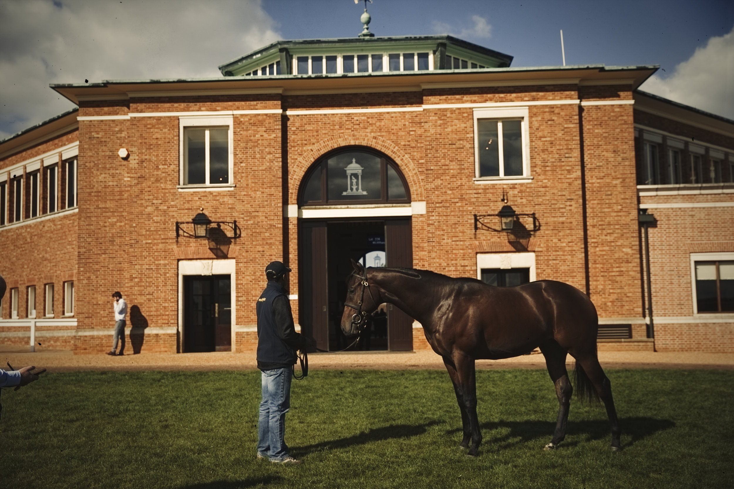 Horse auction photo shoot Tattersalls