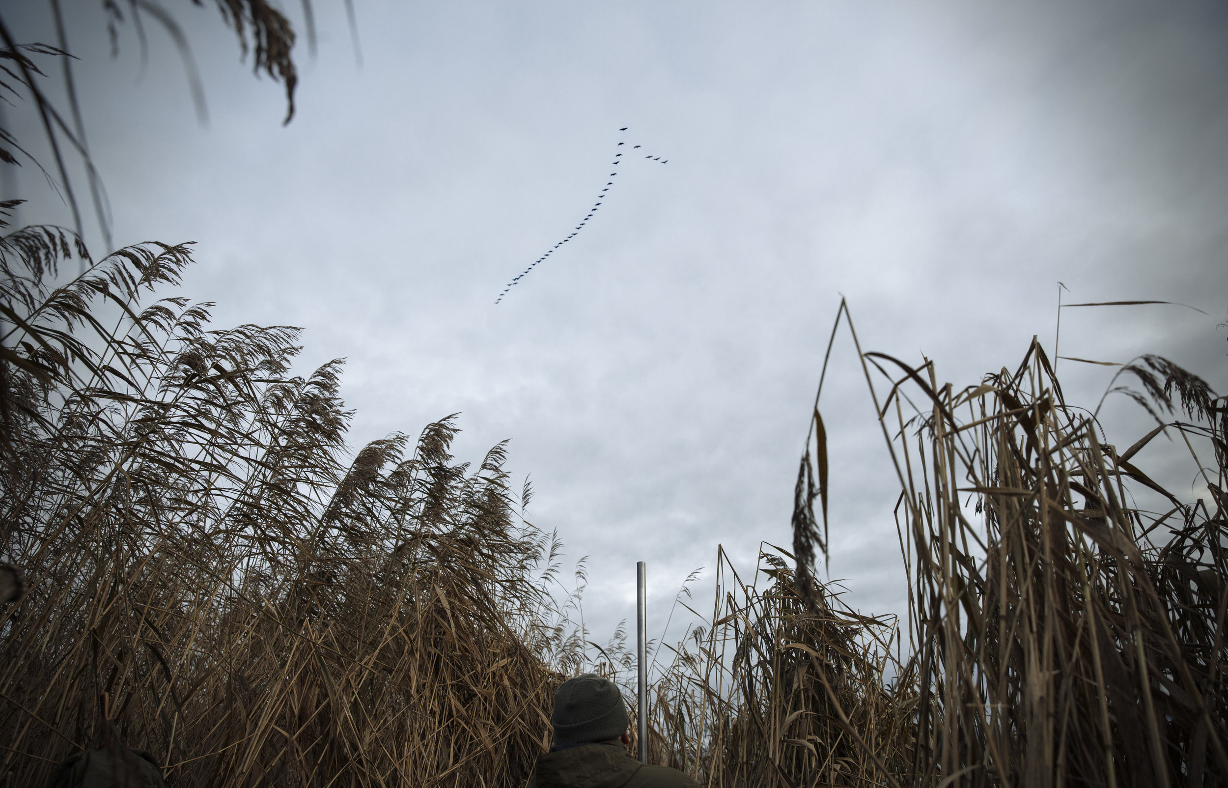 Wildfowling on the Humber and a Wild Goose Chase - Nature & Lifestyle Photography