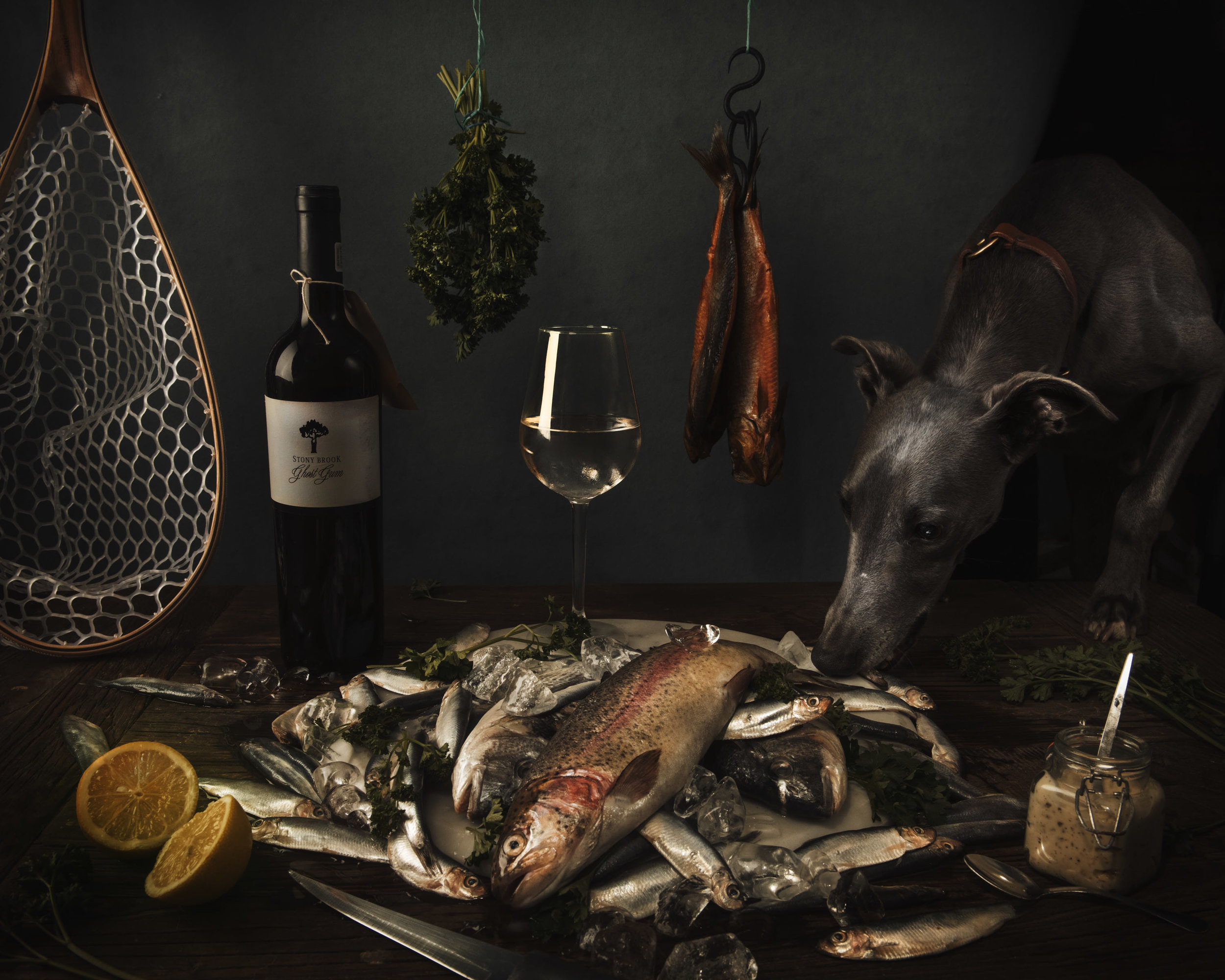 A whippet sniffing a table of fresh fish - white wine