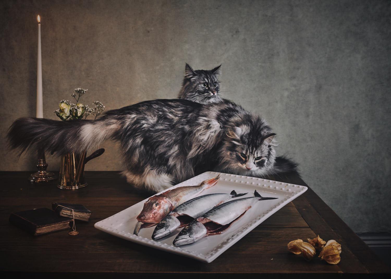 dutch-masters--of-cats-shot-by-matthew-lloyd 2.jpg