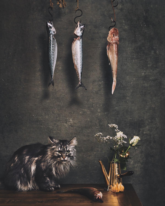 dutch-masters--of-cats-shot-by-matthew-lloyd 1.jpg