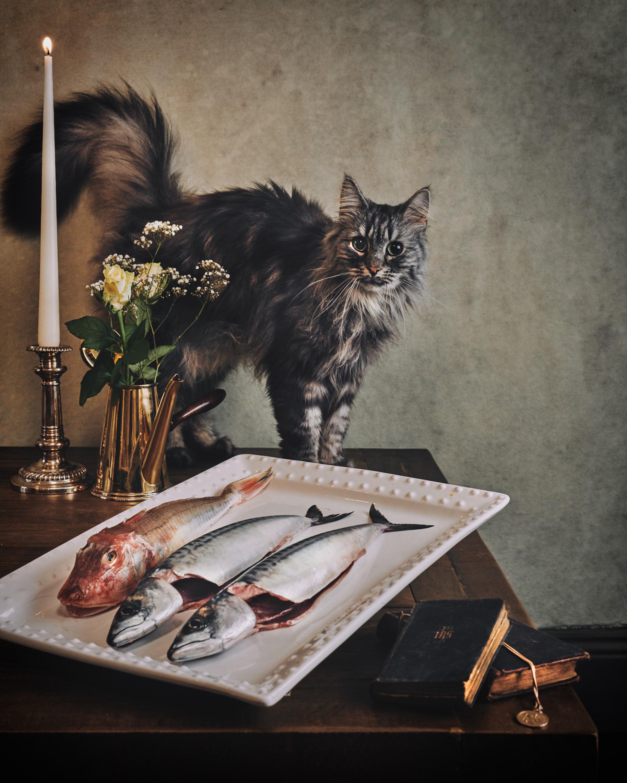dutch-masters--of-cats-shot-by-matthew-lloyd.jpg