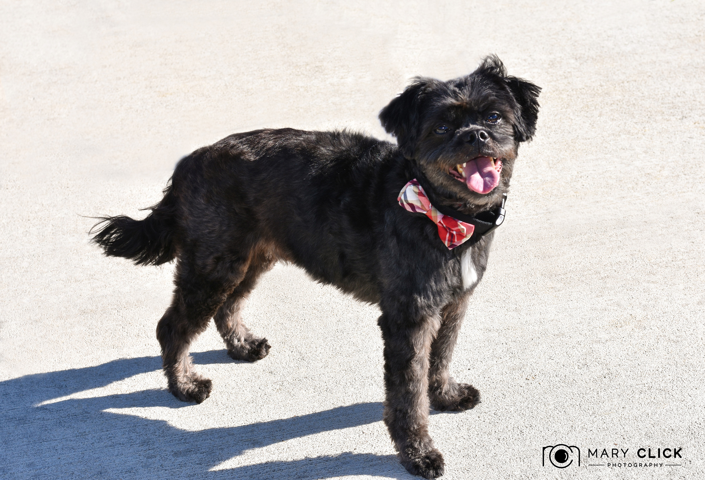 Brighton is an energetic little spirit! He loves to love and go on walks!