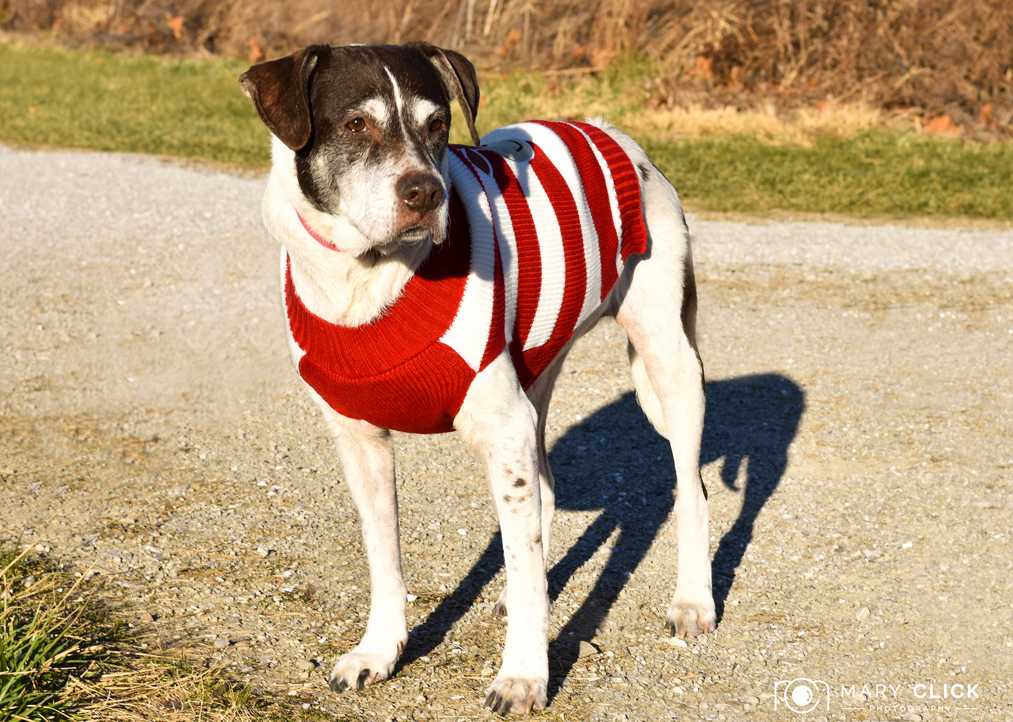 """""""Suki"""" is a 9-year old female mixed breed."""