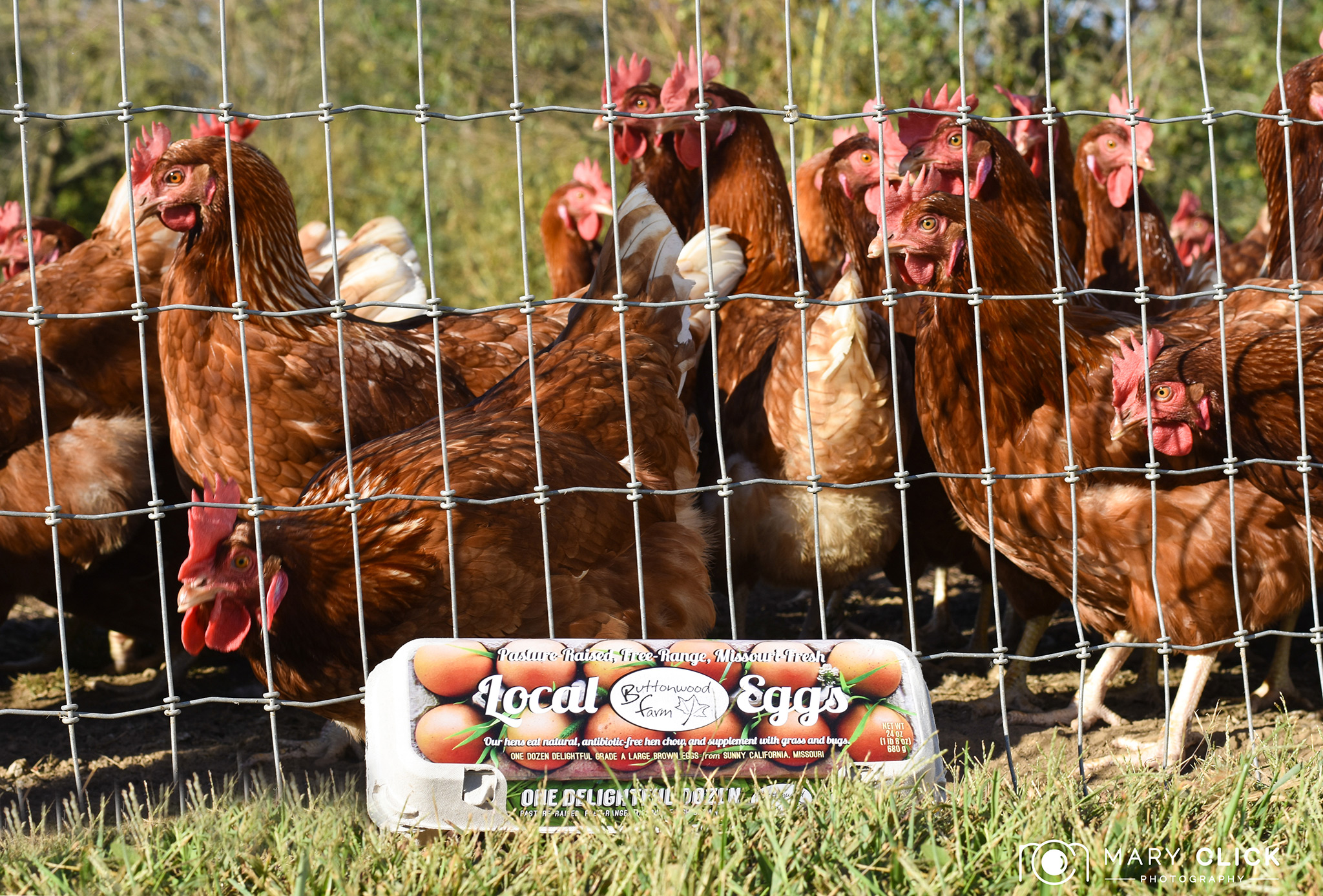 Buttonwood Farm Chickens & Eggs