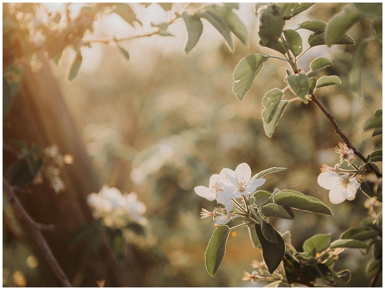Holly McMurter Photographs   Spring Minis