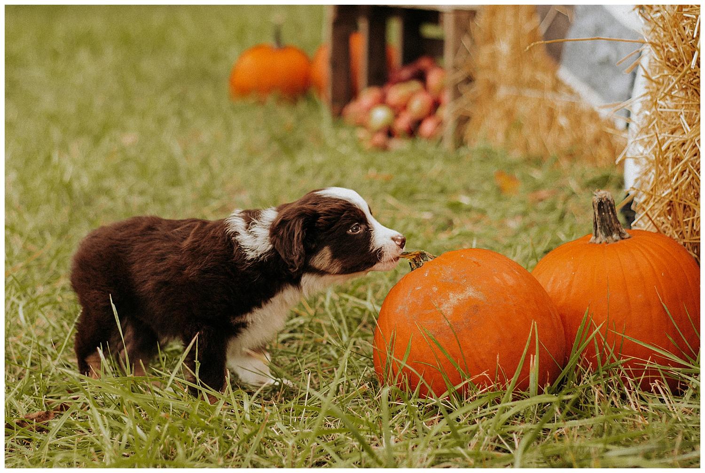 Holly McMurter Photographs | Prince Edward County | Fall Mini Session_0009.jpg