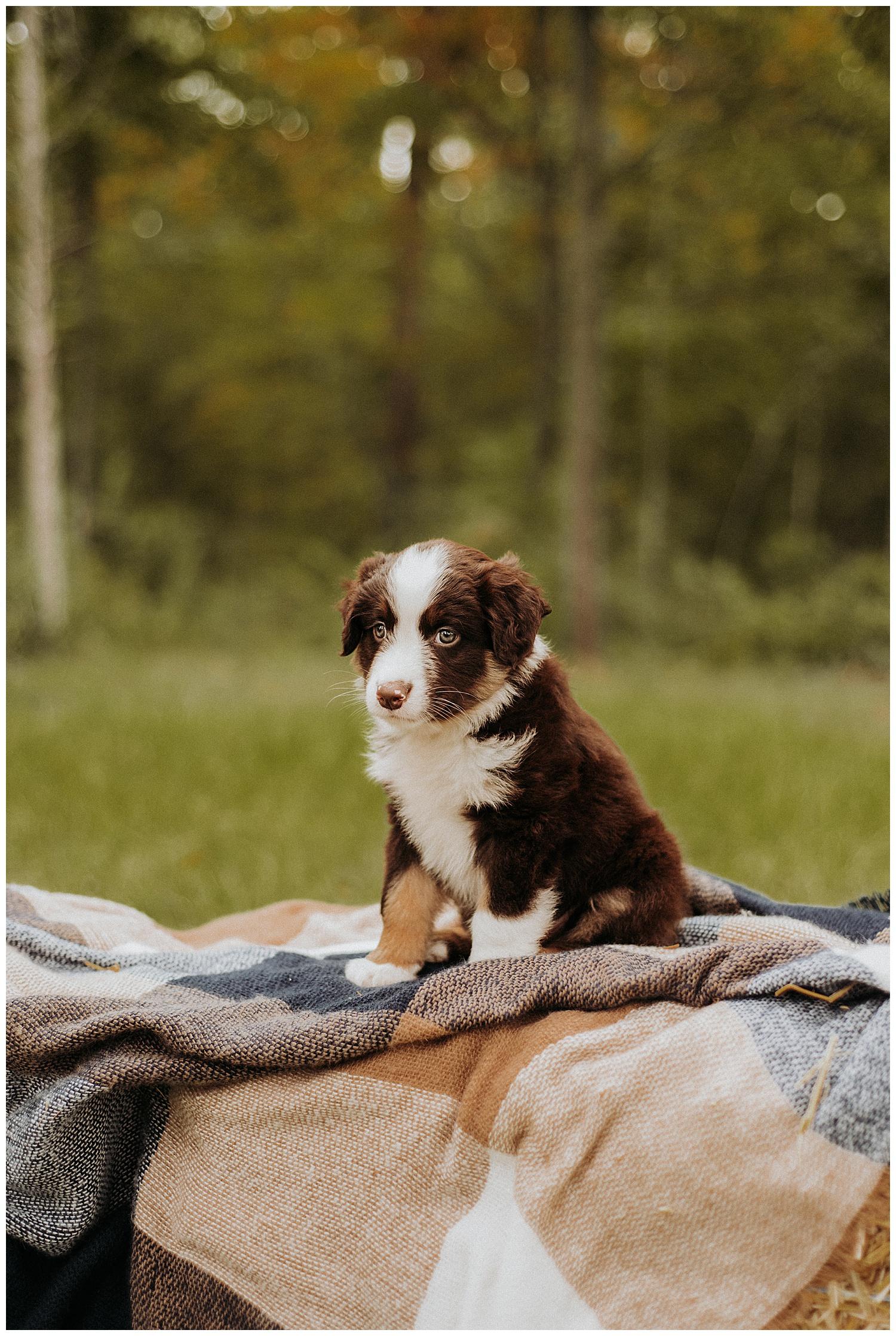 Holly McMurter Photographs | Prince Edward County | Fall Mini Session_0007.jpg