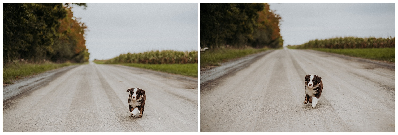 Holly McMurter Photographs | Prince Edward County | Fall Mini Session_0025.jpg