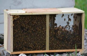 Package Bee Installation.jpg