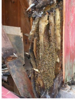 Bee Removal.jpg