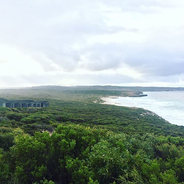 Day eight: waking up at breathtaking @southernoceanlodge on Kangaroo Island 👌🏻for @suitcase . . . . . #travel #myinstadiary #travelwriting #travelholic #travelwriting #travelpic #luxurylifestyle #luxuryhotels #kangarooisland #southaustralia #authentickangarooisland #picoftheday #instago #tuesday #gohere #travelblogger #digitalnomads #suitcasetravel #suitcase #dreamscape #naturalbeauty #roomwithaview