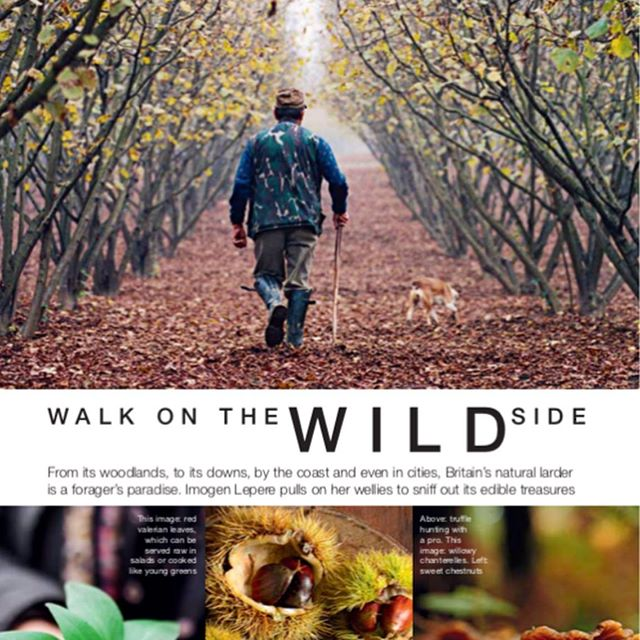 For my latest piece 'walk on the wild side' I spoke to the UK's top foragers about where to hunt for wild food this Autumn. Check it out in the new issue of @foodandtraveled . . . . . . #foodandtravel #feedfeed #foodwriter #foodie #foodgasm #freelancewriter #yummy #sustainableliving #greenliving #healthyliving #nature #picoftheday #goodreads #freelancejourno #independentjournalism #feedme #eatthis #eeeeeats #graphicdesign #coffeetablemags #travelblogger #foodblogger #travelgb