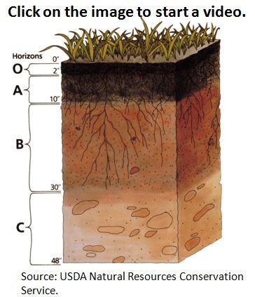 Soil_profile.JPG