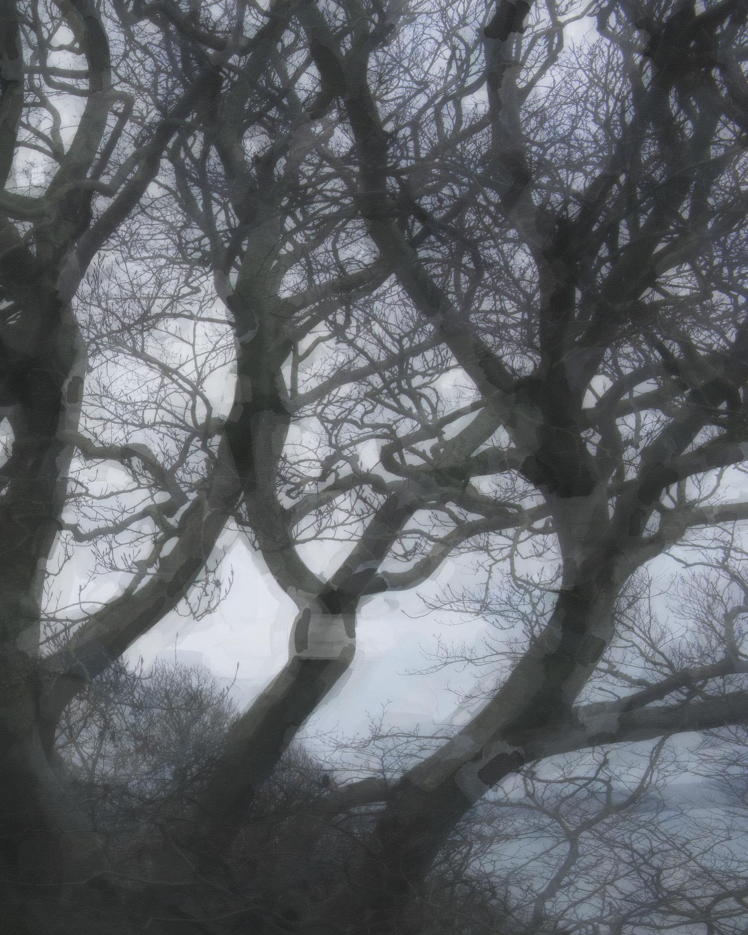 Tree-print.jpg